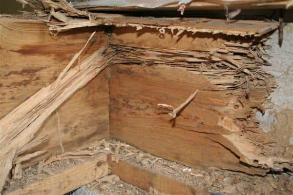Does Homeowners Insurance Cover Termite Damage | Parker Pest Control