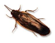 wood_roach2